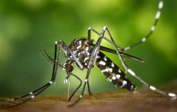 le-chikungunya-retour